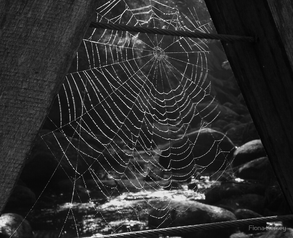 Morning Web by Fiona Kersey