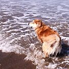saz running after the ball in the sea by xxnatbxx