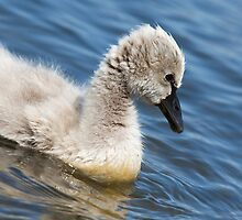 The Ugly Duckling by Korske Ara