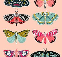 Lepidoptery No. 1 by Andrea Lauren  by Andrea Lauren
