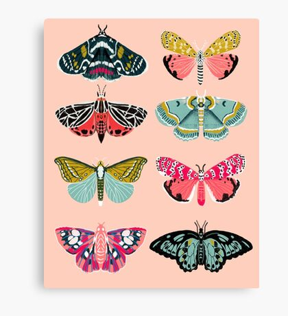 Lepidoptery No. 1 by Andrea Lauren  Canvas Print