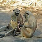 Langur monkeys, just like human!!! by Marieseyes