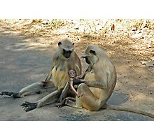 Langur monkeys, just like human!!! Photographic Print