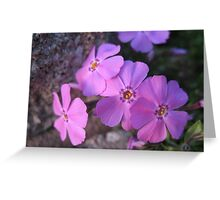 Exploding Pinks Greeting Card