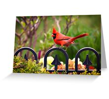 Male Red Cardinal in the Garden Greeting Card