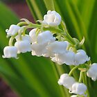Lilly of the Valley by Oldcowgirl