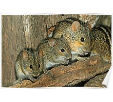 MOUSE FAMILY Poster