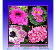 Pinkies Collage -  Pink Summer Flowers Photographic Print
