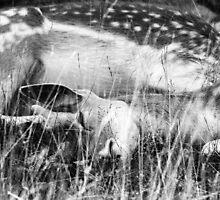 Deer Me So Tired by Trip69