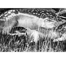 Deer Me So Tired Photographic Print