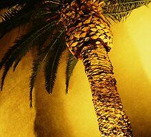 Palm Tree by YoPedro