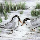 Terns on Cape Cod by Pamela Plante
