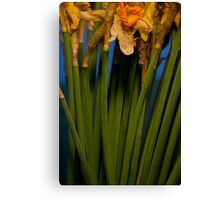Wilted Daffodils Canvas Print