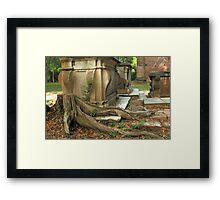 Confederate gravestone and live oak roots, Old Sheldon Church Ruins, Sheldon, South Carolina Framed Print