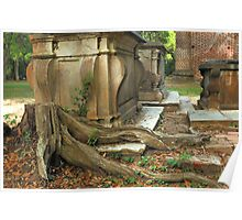 Confederate gravestone and live oak roots, Old Sheldon Church Ruins, Sheldon, South Carolina Poster