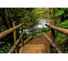 Bridge on the Trail Photographic Print