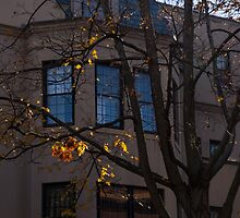 Washington, DC Facades - Dupont Circle Neighborhood  by Georgia Mizuleva
