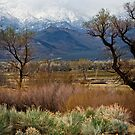 Bishop Meadow by socalgirl