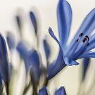 Blur, flowers by Kornrawiee