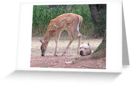 The Fawn And The Pit Bull by Ginny York