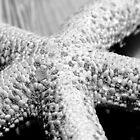 Starfish by Patrick Lemmens