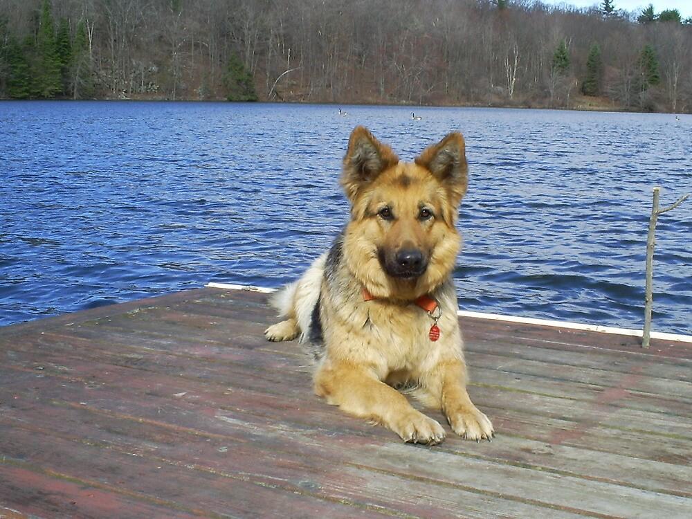 Max at the lake by GSDman
