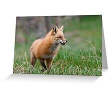 Fox Biscuits Greeting Card