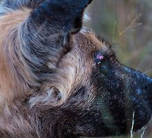 African Wild Dog  by Marylou Badeaux