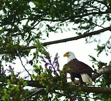 Watchful Perch by Shaynelee