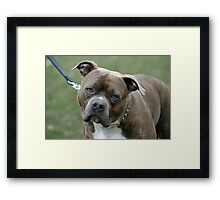 Can you unhook the leash now? Framed Print