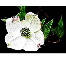 Simply White Photographic Print