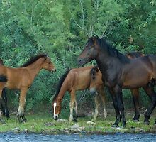 Together in the Wild by Sue  Cullumber