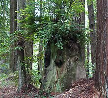 The Stump with the Fresh Green Wig by Martha Sherman