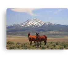 Where The Mustangs Roam Canvas Print