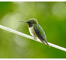 Hummingbird on a Wire Photographic Print