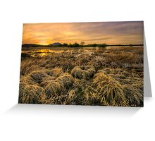 Straw Balls Greeting Card