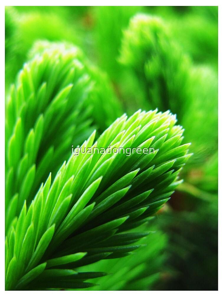 Nevergreen by iguanadongreen