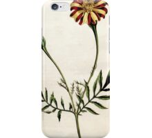 The Botanical magazine, or, Flower garden displayed by William Curtis V5 v6 1792 1793 0013 Tagetes Patula, Spreading Tagetes, French Marigold iPhone Case/Skin