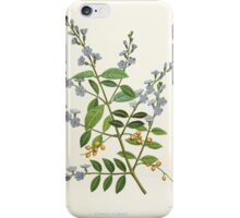 Familiar Flowers of India With Colored Plates, Lena Lowis 0065 Duranta Plumeri iPhone Case/Skin