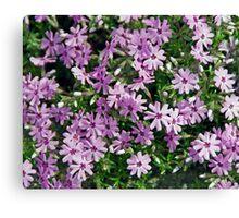 Teeny Blooms Canvas Print