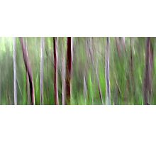 Woodlands Photographic Print