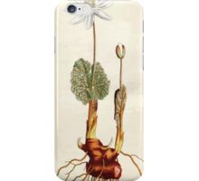 The Botanical magazine, or, Flower garden displayed by William Curtis V5 v6 1792 1793 0037 Sanguinaria canadensis, Canada Puccoon or Bloodwort iPhone Case/Skin