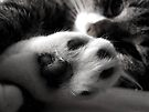 Kitty Foot by Veronica Schultz