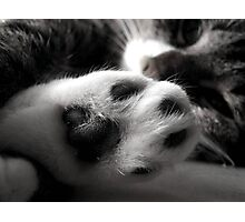 Kitty Foot Photographic Print