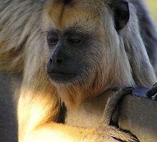 Howler monkey - Pantanal, Brasil by Nupur Nag