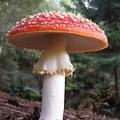 Amanita Muscaria.  by Esther's Art and Photography