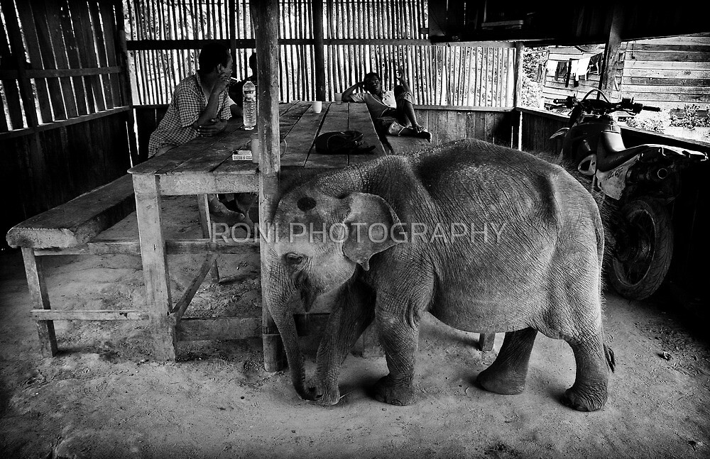 we share the shelter by RONI PHOTOGRAPHY