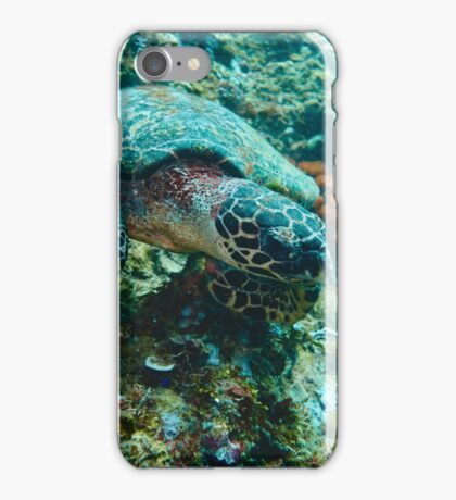 Turtle grassing on corals iPhone Case/Skin