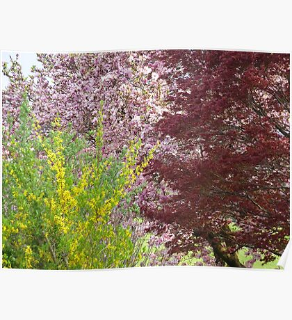 Tri Color Spring Blooms  Poster