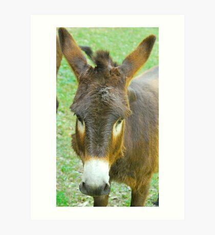 Eeyore The Donkey Art Print